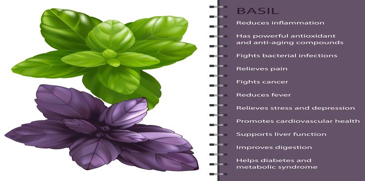 list of tulsi health benefits