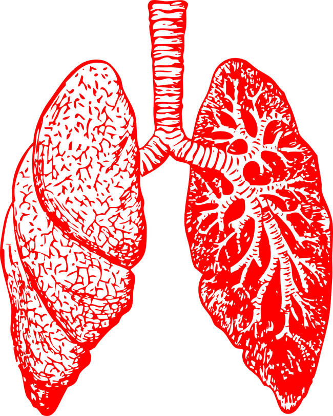 what is bronchitis, its symptoms and cause