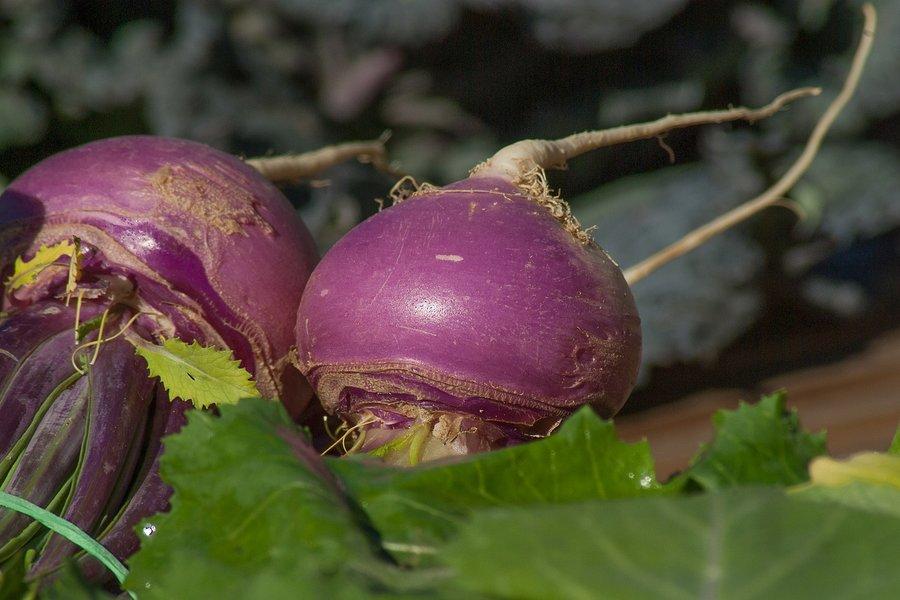 vitamin k best source turnip