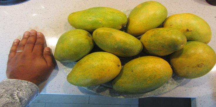 badami south indian alphanso mango