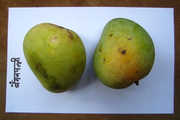 pair of baigan palli mango