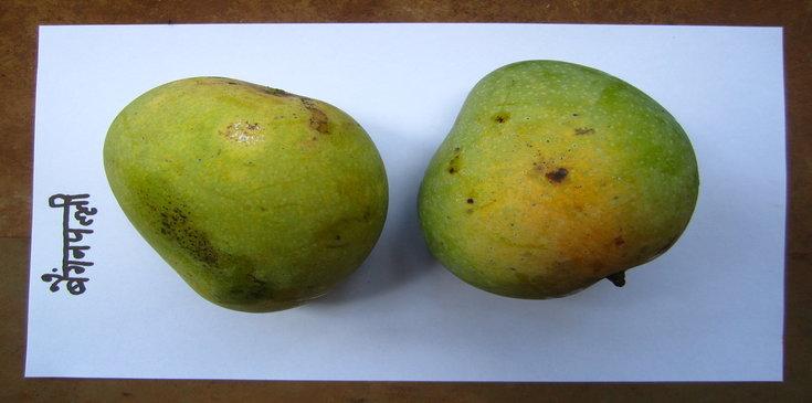 benishan baigan palli south indian mango