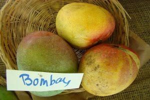 bombaiya malda or bombay mango