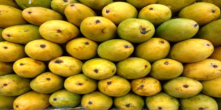 dashari up mango