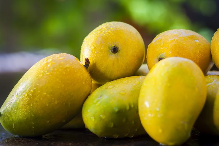 gujrati kesar mango