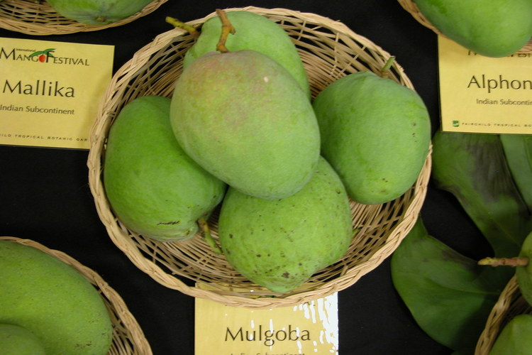 fresh mulgoba mango in display