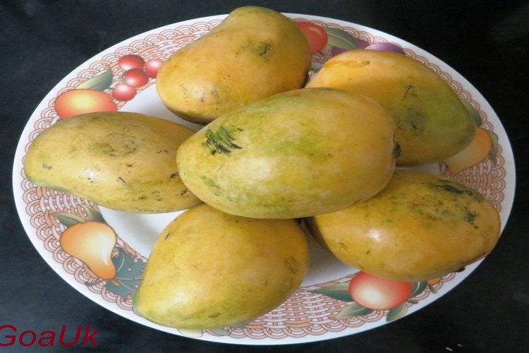 neelam mangoes kept on plate