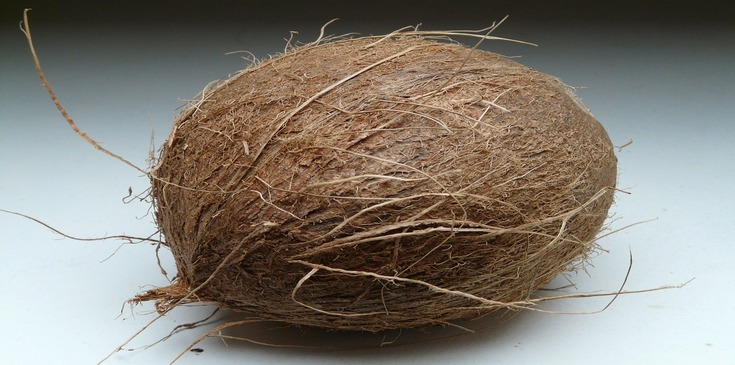 Whole mature coconut with hard shell