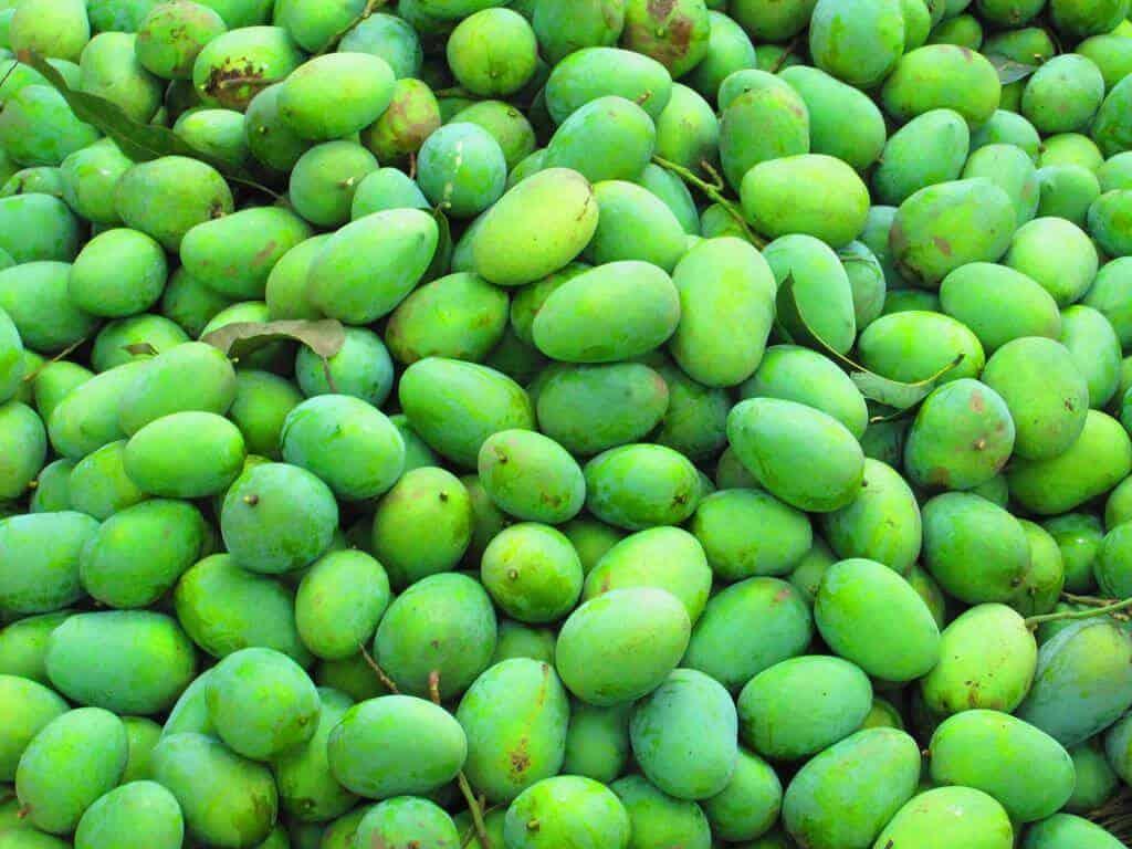 bombay green or bombay malda